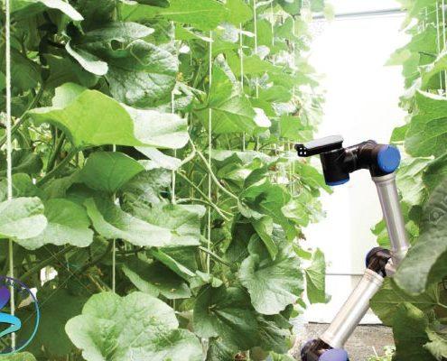 شتابدهی رشد واحدهای فناور فعال در حوزه کشاورزی